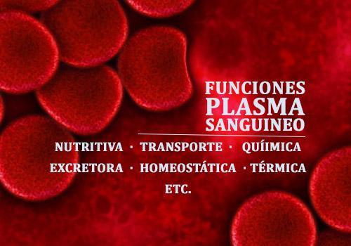 Plasma no sangue: formação, componentes e funções 2