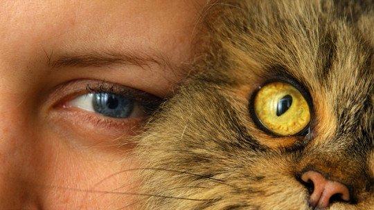 Gatos dominam seus donos, revela estudo 1