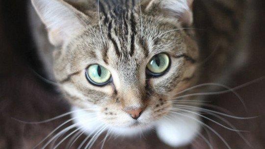 Os gatos amam os seres humanos mais do que pensávamos 1