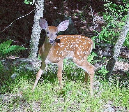 26 Animais da floresta e suas características (com imagens) 8
