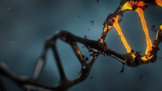 Descobriu um gene relacionado ao envelhecimento cerebral 1