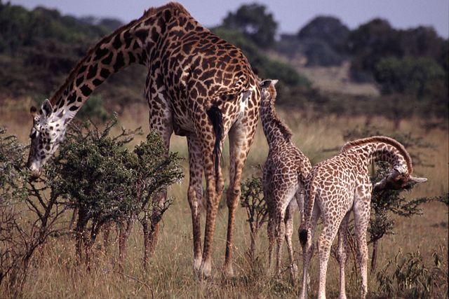 Adaptação biológica: características, tipos, exemplos 3