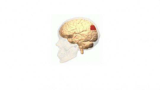 Curva angular (cérebro): áreas, funções e distúrbios associados 1