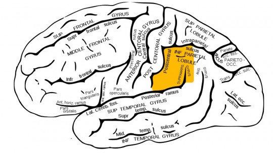 Giro supramarginal: funções e distúrbios associados a esta região cerebral 1