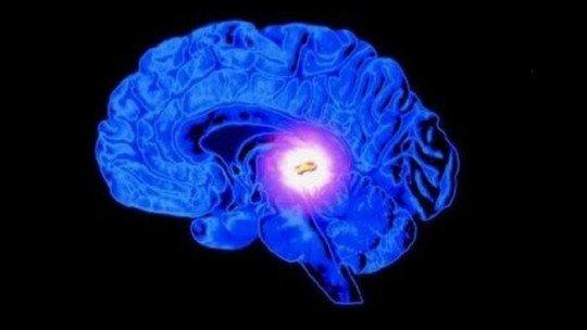 Hipófise (hipófise): o nexo entre hormônios e hormônios 1