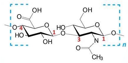 Glicosaminoglicanos: características e funções 1