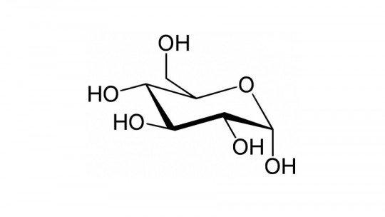 Glicólise: o que é e quais são suas 10 fases? 1