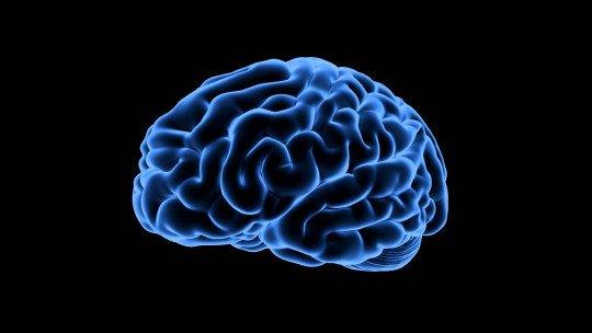 Glutamato (neurotransmissor): definição e funções 1