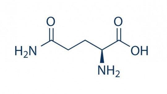 Glutamina (aminoácido): características e funções 1