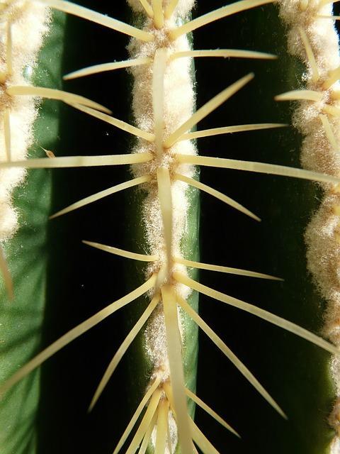 Echinocactus grusonii: características, cuidados e pragas 2