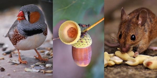 Animais granívoros: características e exemplos 1