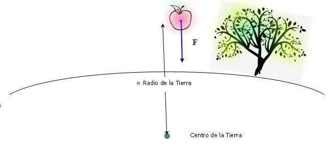Aceleração da gravidade: o que é, como é medido e se exercita 12