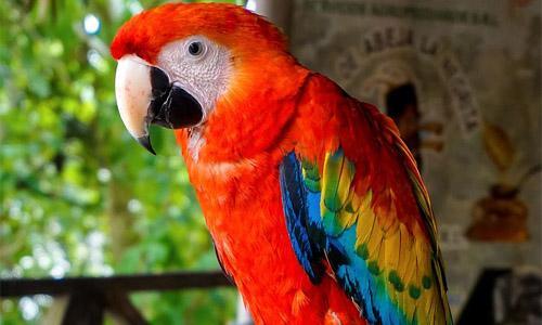 Animais transportados pelo ar: características e exemplos 7