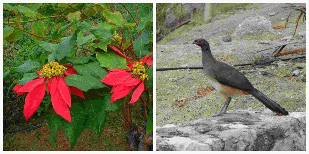 Flora e fauna de Guerrero: espécies mais representativas 1