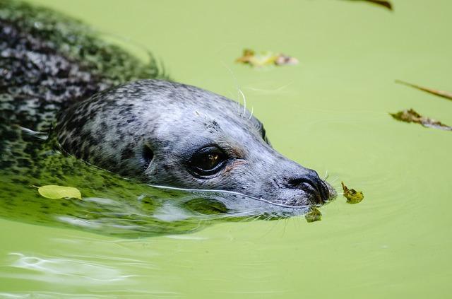 10 animais que vivem em um ambiente de transição 3