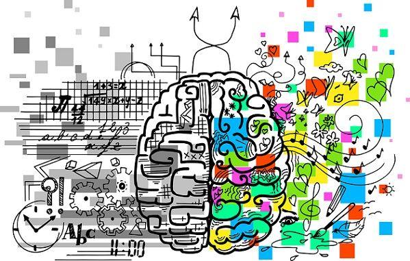 Hemisfério cerebral direito: características e funções 1