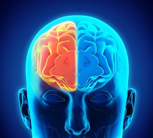 Hemisfério cerebral esquerdo: funções, características 1