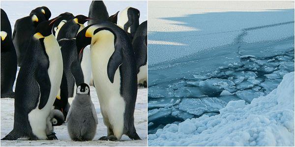 Gelo perpétuo: características, clima, flora, fauna 1