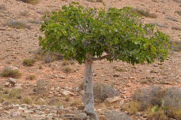 A flora da costa peruana: espécies e conservação 6