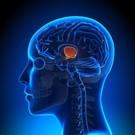 Hipotálamo: Funções, Anatomia e Doenças 4