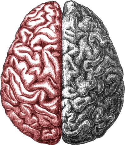 Hemisfério cerebral esquerdo: funções, características 6