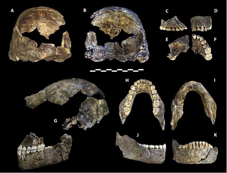 Homo Naledi: descobertas, características, crânio 2