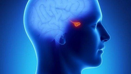 Hormônio adrenocorticotrópico: definição, funções e doenças associadas 1