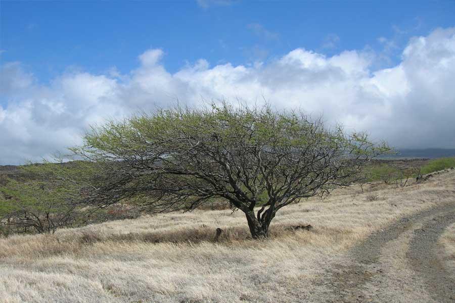 Cordilheira das estepes: características, clima, flora e fauna 2