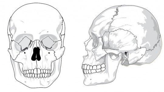 Ossos da cabeça (crânio): quantos existem e como são chamados? 1