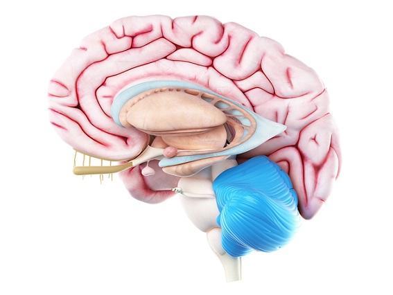 Memória processual: tipos, funcionamento e fisiologia 4