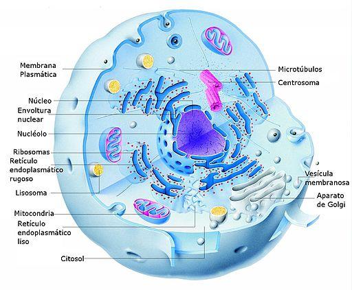 Quantas células o corpo humano possui? 3