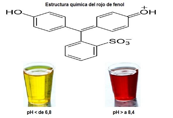 Vermelho de fenol: características, preparação, aplicações 1