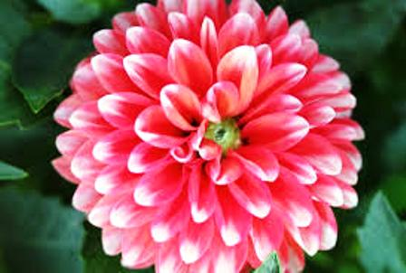 Campo Semântico das Flores: Destaques 4