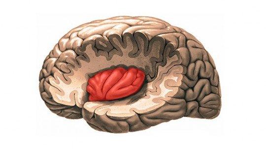 A ínsula: anatomia e funções desta parte do cérebro 1