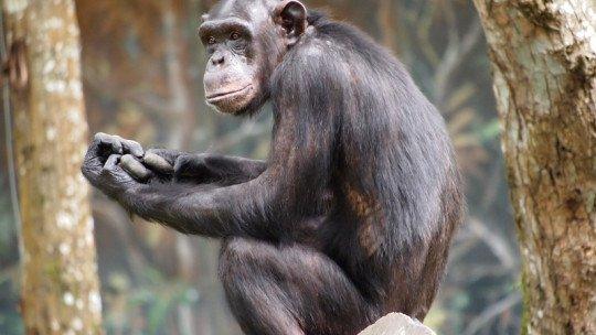 Inteligência animal: as teorias de Thorndike e Köhler 1