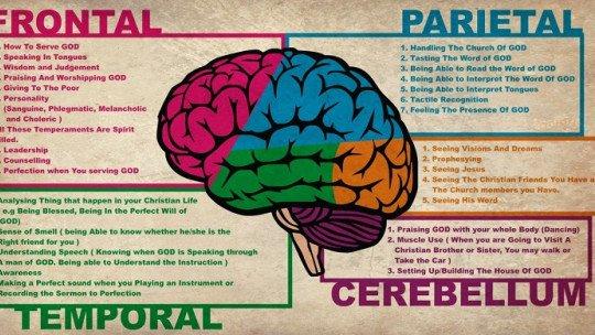 Uma investigação conclui que a inteligência é essencialmente social 1