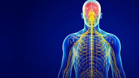 Interocepção: ouvir o próprio corpo 1