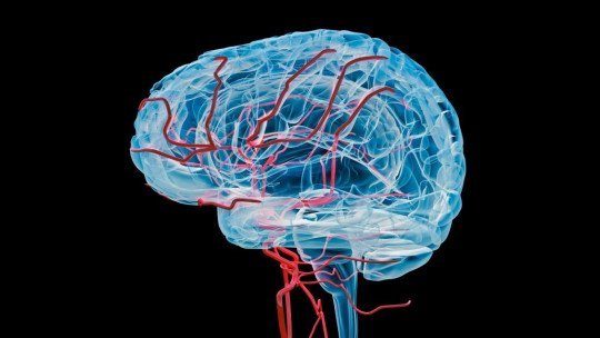 Irrigação do sangue no cérebro: anatomia, fases e caminho 1