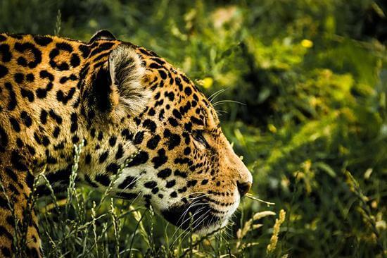 10 animais da Amazônia equatoriana (leste)