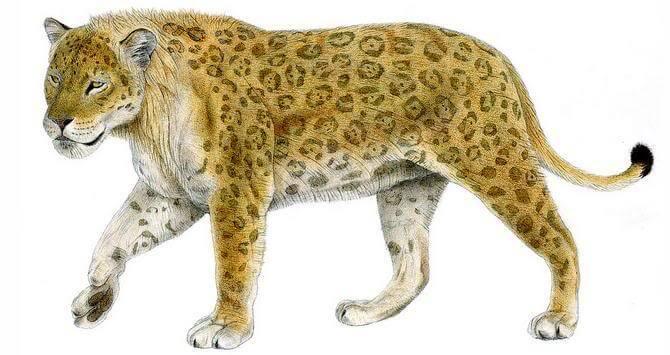 71 animais extintos em todo o mundo (e causas) 14