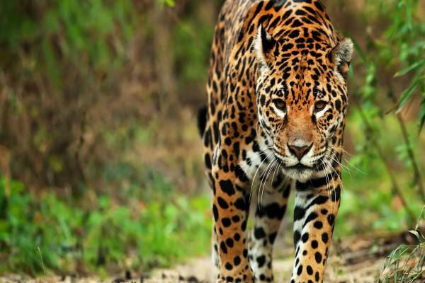 Fauna do México: os 10 animais mais característicos 2
