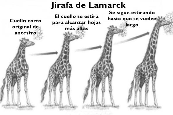 Teoria da evolução de Lamarck: origem, postulados, exemplos