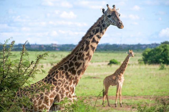 Animais quadrúpedes: características e exemplos 5