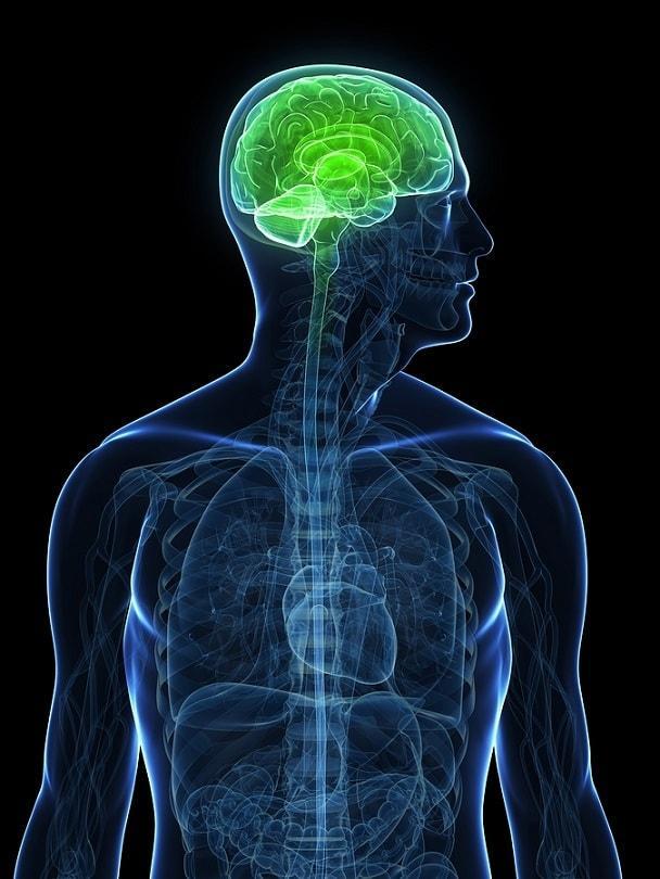 Líquido cerebrospinal: características, circulação, função 1