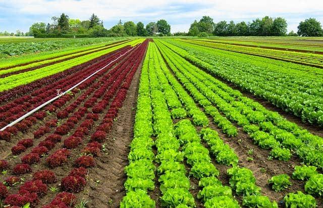 Como e quando foi a descoberta da agricultura? 1
