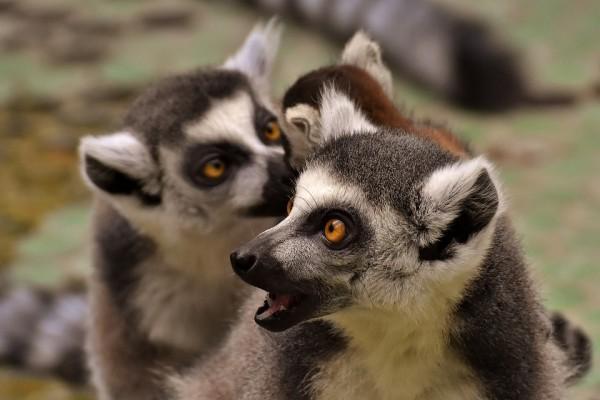 Flora e fauna de Madagascar: espécies mais representativas 1