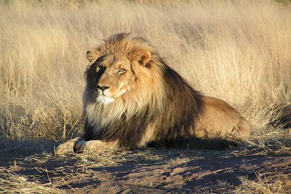100 fatos curiosos sobre os animais que o surpreenderão 2