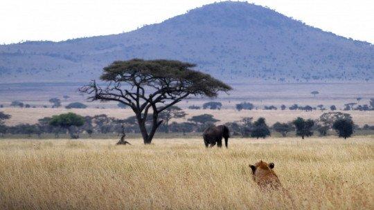 As 10 melhores lendas africanas (e sua explicação) 1