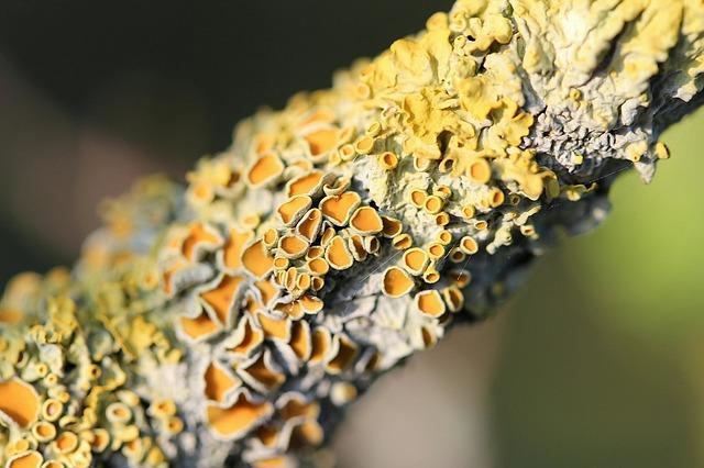 Simbiose: tipos, características e exemplos na natureza 1