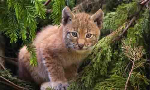 26 Animais da floresta e suas características (com imagens) 14